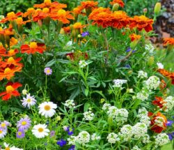Cele mai rezistente flori la umbra