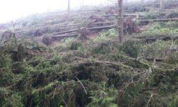 Suceava: Peste 55 hectare de padure au fost distruse de o furtuna puternica