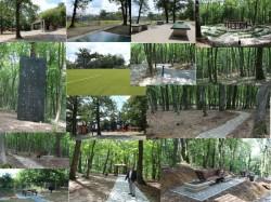 Padurea Schullerwald va fi inaugurata in acest sfarsit de saptamana