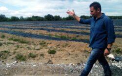 Un bucurestean va produce afine bio in Dambovita. Investitia se ridica la aproape 4 milioane de lei