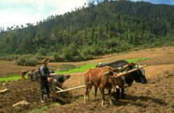 Bhutan trece la agricultura organica