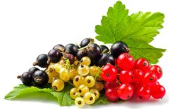 Cinci fructe de padure cu efect terapeutic