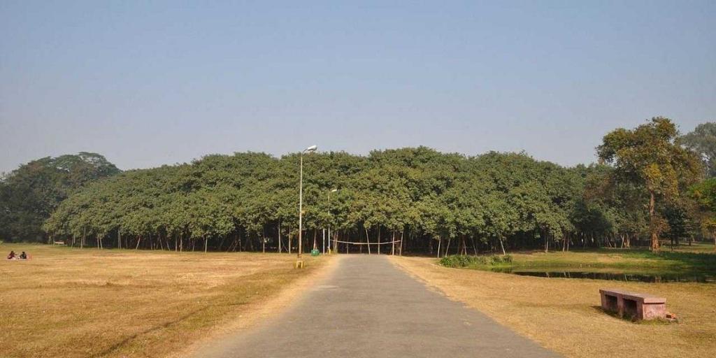 Un copac cat o padure