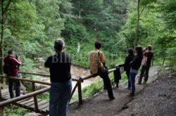 Iubitorii calatoriilor in natura pot merge saptamanal in excursii prin judet, pentru a vizita Tara Beiusului si Muntii Apuseni