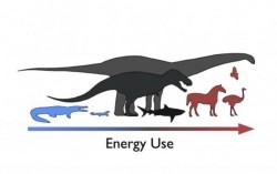 Cercetatorii descurca energetica dinozaurilor