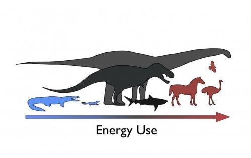 Cercet?torii descurc? energetica dinozaurilor