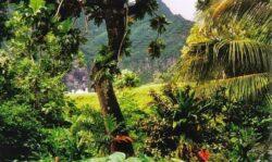 Omul care a plantat singur o padure - video