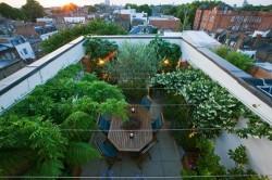 In lipsa spatiilor verzi, bucurestenii au gasit solutia care in cativa ani ar putea ajuta la combaterea poluarii: gradinile suspendate