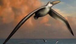 Noua descoperire despre cea mai mare pasare marina din istorie