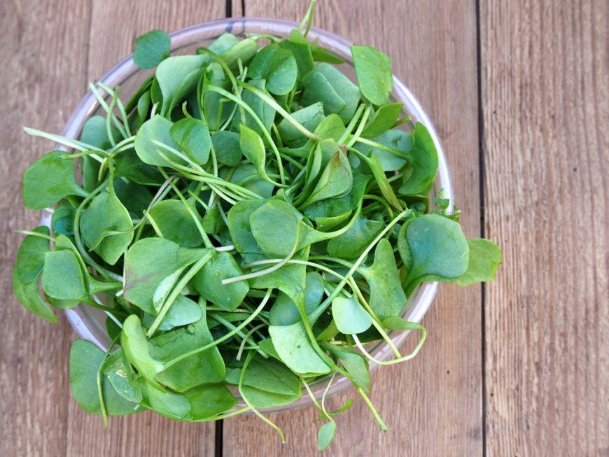 Cele mai hr?nitoare legume de pe planet?: au cea mai mare concentra?ie de nutrien?i