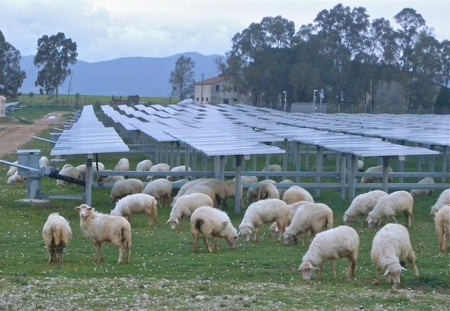 Oi angajate la o ferma de panouri solare