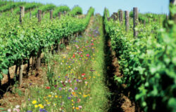 Studiu Rodale Institute (SUA): Agricultura organica, solutia la problemele incalzirii globale si insecuritatii alimentare