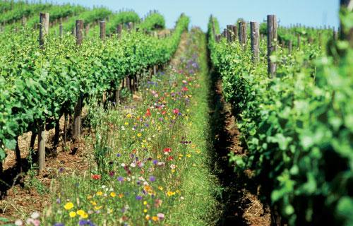 Studiu Rodale Institute (SUA): Agricultura organic?, solu?ia la problemele înc?lzirii globale ?i insecurit??ii alimentare