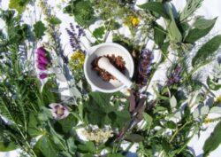 Romania va avea primul ghid al plantelor salbatice in limba engleza. Va contine 1000 de specii ce cresc la noi si va fi util pentru medicina alternativa