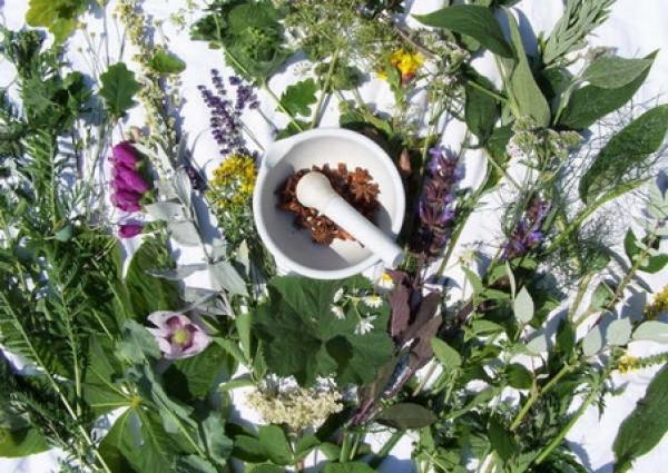 România va avea primul ghid al plantelor s?lbatice in limba engleza. Va contine 1000 de specii ce cresc la noi si va fi util pentru medicina alternativa