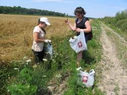 Plante medicinale adunate de voluntari, la Satu Mare