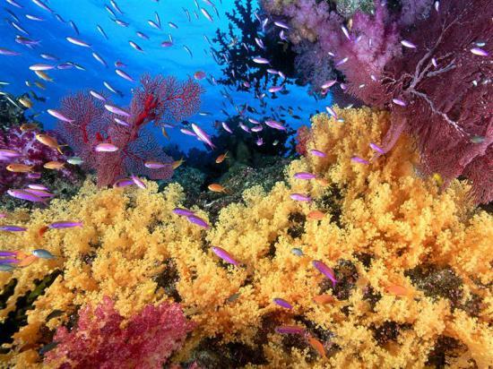 Una din cele mai frumoase minuni ale naturii, pe cale de dispari?ie: Au înregistrat pierderi masive din cauza activit??ilor umane
