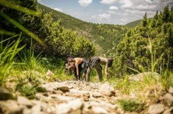Tasuleasa Social reabiliteaza in Muntii Calimani un traseu unic: Drumul Mariei Theresia