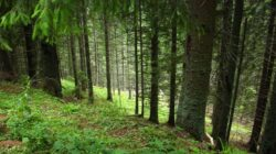 Se depun dosare pentru administrarea ariilor naturale protejate