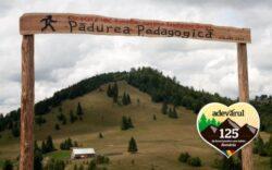 Zona de neratat: Padurea Pedagogica de la Tihuta, locul unde ecologia si biologia se invata pe viu