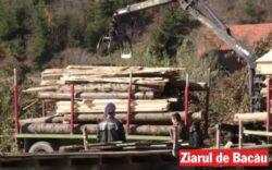 Politia, Antifrauda, Garda de Mediu si Silvicul au dat amenzi de 100.000 de lei pe Valea Muntelui