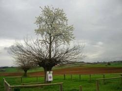 Din minunile naturii: Copacul care creste mare in varful altui copac
