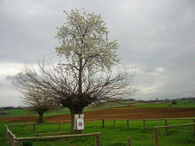 Din minunile naturii: Copacul care cre?te mare în vârful altui copac