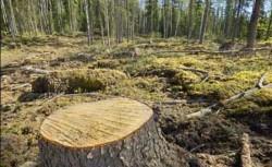 Eurobarometru: Noua din zece romani dau importanta protectiei mediului