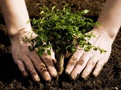 Ecologii realizeaz? un proiect comun de protejare a mediului înconjur?tor