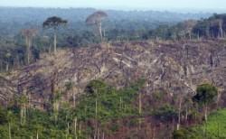 Directia Silvica taie arbori din zonele afectate de inundatii