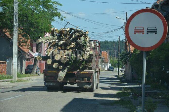 În Bihor, bu?tenii ies din p?dure doar cu cod dat de smartphone. Lemnarii care nu se supun risc? s? r?mân? cu afacerea suspendat?!