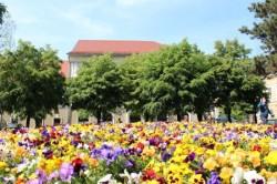 Autoritatile romane vor cumpara produse ecologice, incepand cu 2015