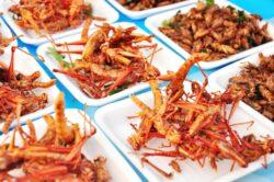 Insectele sunt hrana viitorului. Expertii in nutritie vor sa le transforme in mancarea principala a omenirii
