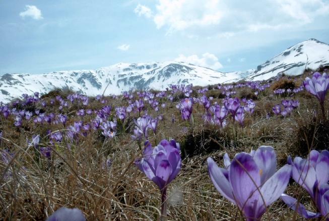O planta extrem de rara a fost redescoperita in Romania dupa mai bine de 100 de ani