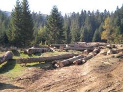 """""""Productia de energie pe biomasa, impiedicata de mafia lemnului"""""""