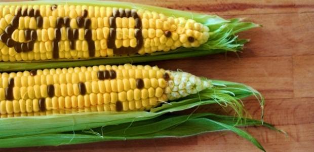 Greenpeace critică folosirea OMG-urilor ca produse alimentare