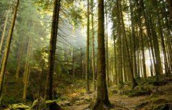 Romsilva a inceput lucrarile la prima perdea forestiera de protectie din ultimii 25 de ani; costuri de 2.500 euro/hectar