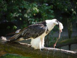 Doua pasari rare au ajuns in colectia gradinii zoologice din Chisinau
