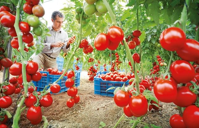 Reducerea continutului de nitrati din legume