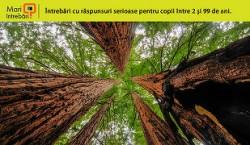 Care sunt cei mai mari copaci din lume?