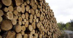 Garda de Mediu, in control la exploatatiile forestiere