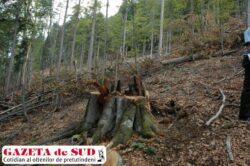 Fosta gradina botanica alpina din Ranca, rasa de pe fata pamantului
