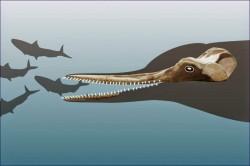 Fosilele unor delfini dintr-o specie disparuta, descoperite in Peru