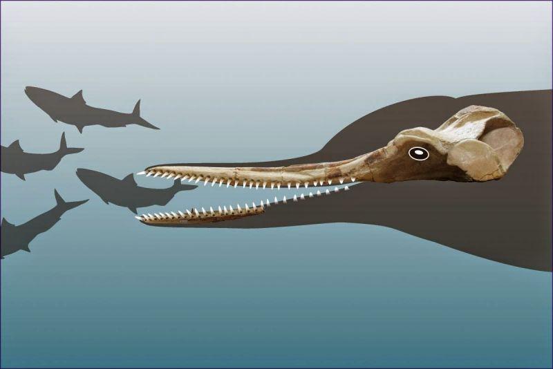 Fosilele unor delfini dintr-o specie disp?rut?, descoperite în Peru