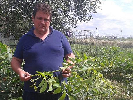 """Afacerea cu nuci în România. Ing. Iosif Kiss: """"Un hectar de livad? de nuc f?cut ca la carte genereaz? un venit de minim 10.000 de euro pe an"""""""