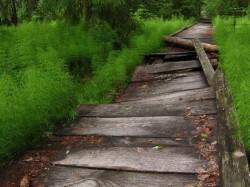 Ecoturism - Tinovul Mare Poiana Stampei, pe intelesul tuturor