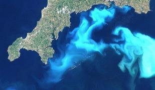Unele specii de alge oceanice pot evolua rapid, ca s? se adapteze la înc?lzirea global?