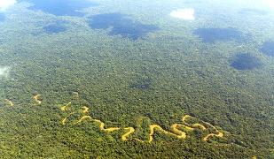 Câţi copaci sunt în Pădurea Amazoniană?