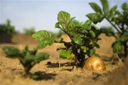 Exporturile Romaniei de produse agricole eco au crescut de 40 de ori in 4 ani