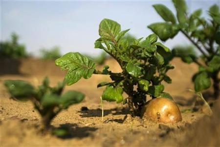 Operatorii înscri?i în sistemul de agricultur? ecologic?, afla?i în perioada de conversie, beneficiaz? de ajutoare